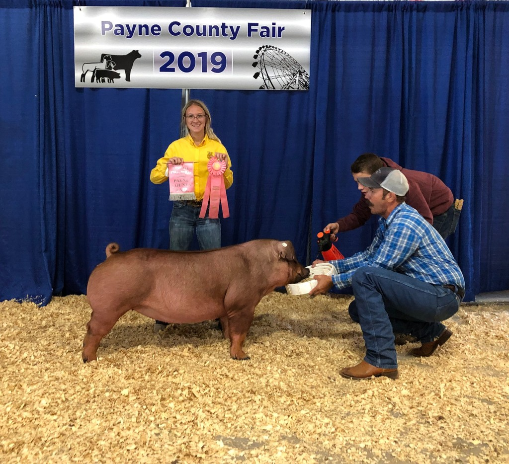 Payton Glasby, Payne County Fair Reserve Supreme Champion Breeding Gilt