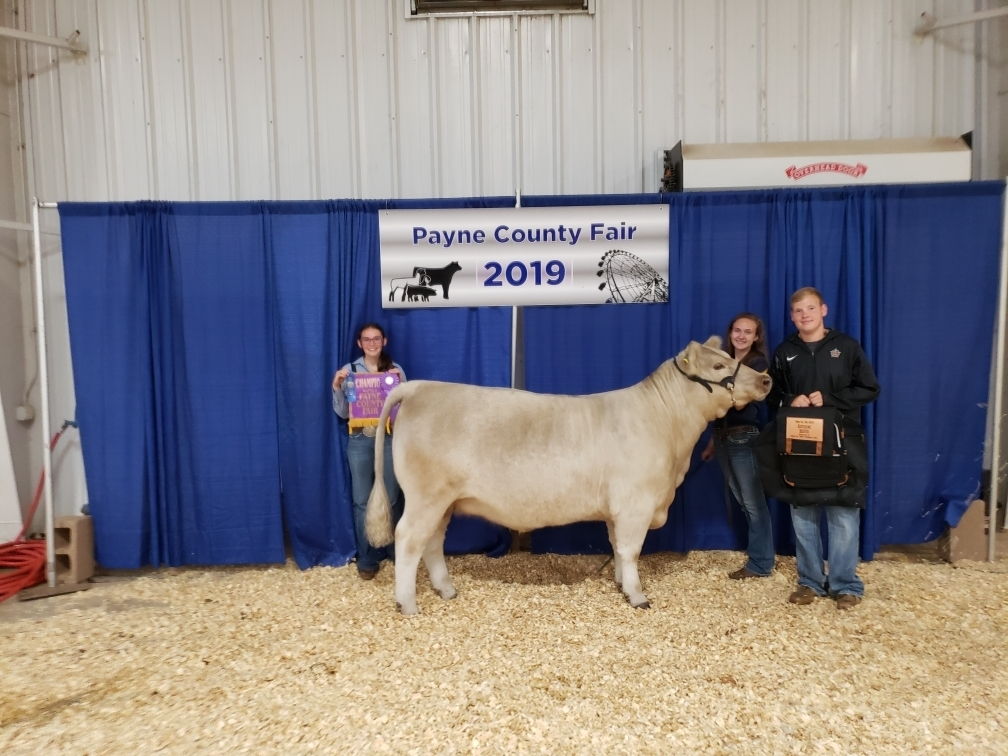 Katelynn Williams Payne County Fair 2019 Supreme Champion Breeding Heifer
